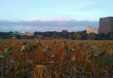 Une soirée d'automne à Ueno