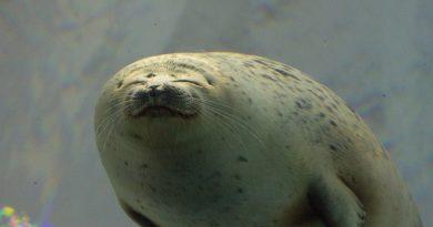 Kaiyukan: l'aquarium aux requins baleines d'Osaka