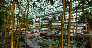 Mizunomori, le jardin botanique du lac Biwa